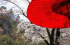 猊鼻渓の春
